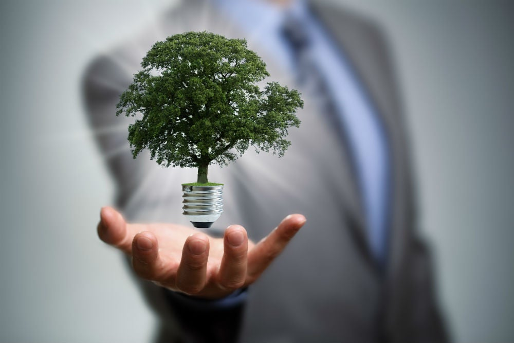 How to manage your business growing green